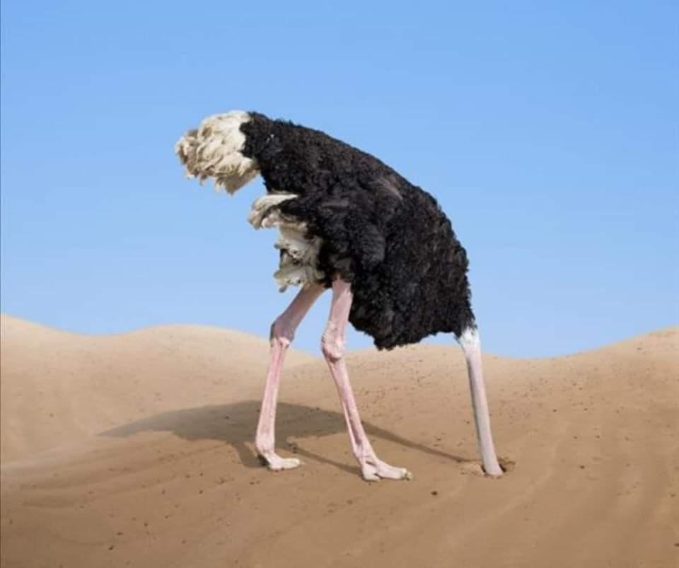 لماذا تدفن النعام رأسها فى الرمال ؟
